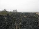 07.03.2012 Flächenbrand :: Flächenbrand B1